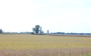 inthe country1